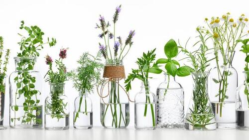 PDF - Les plantes médicinales