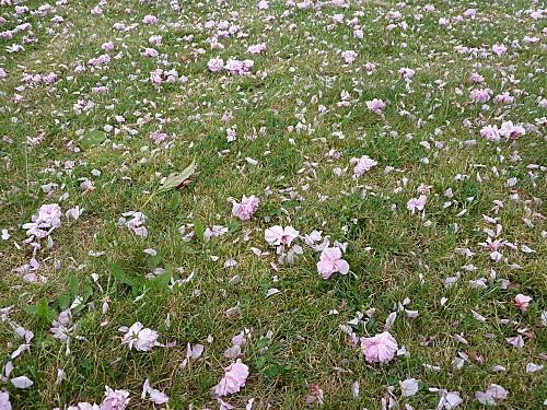 tapis-fleuri-007.jpg
