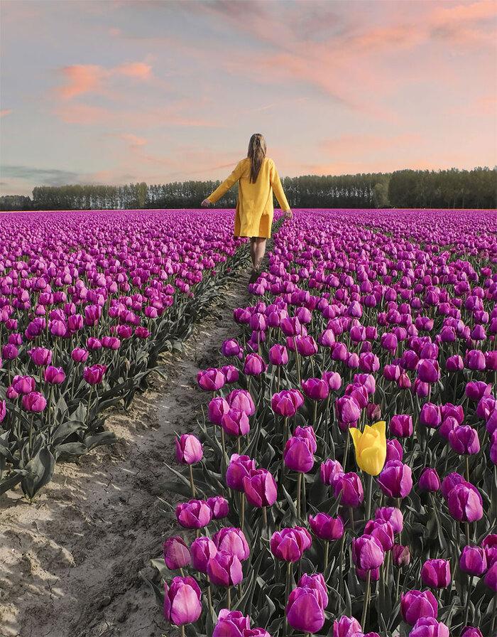 7 millions de fleurs aux Pays-Bas
