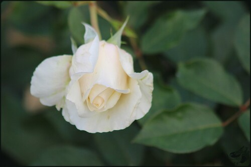 Portes Ouvertes 'Parfums D'Automne' Chez Filroses(3)