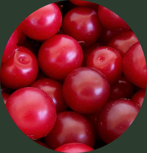 Vertus médicinales des légumes et des fruits : PRUNIER