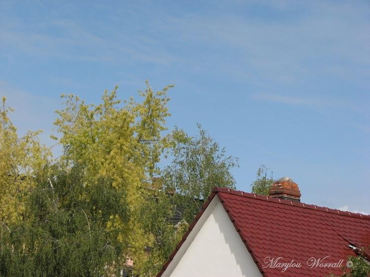 Ciel d'Alsace 331