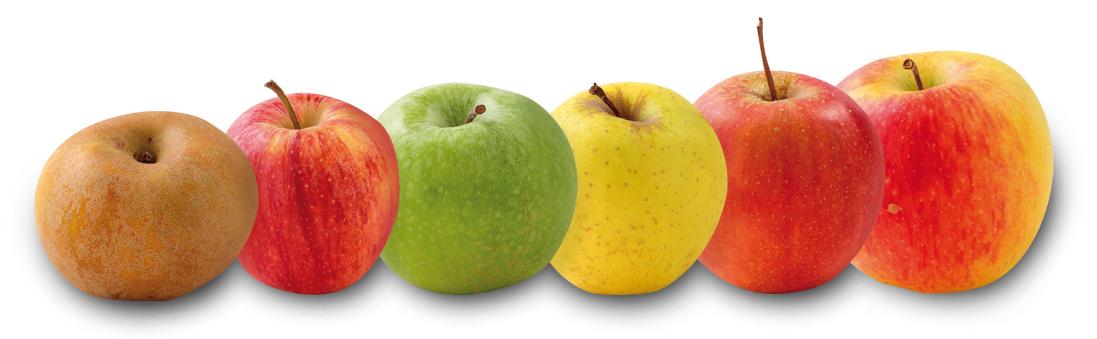 Le retour des pommes