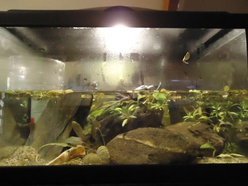 Aquarium de 20l