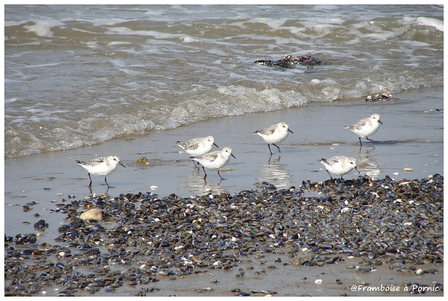 Oiseaux de bord de mer de la côte de Jade