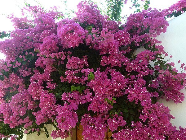 fleurs-rhodes-11.jpg