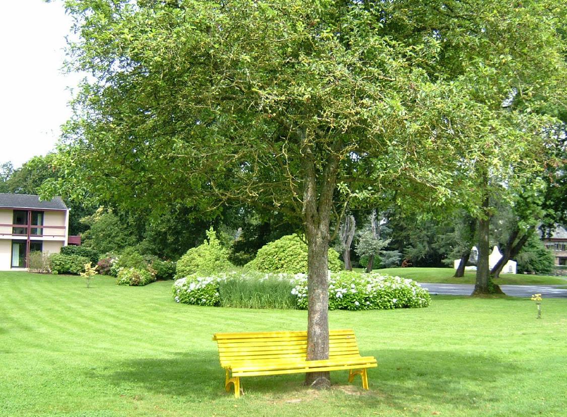 arbre et banc