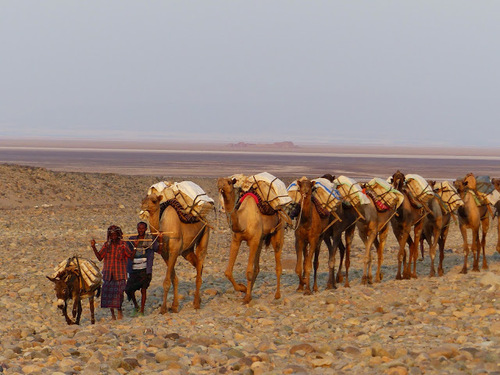 caravane de sel en Ethiopie