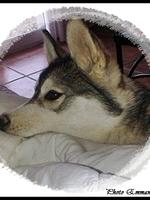 Janouska (5 mois)