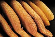 Rayons naturels de la ruche en paille
