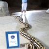 Fluffy - Longest Snake_0069.jpg