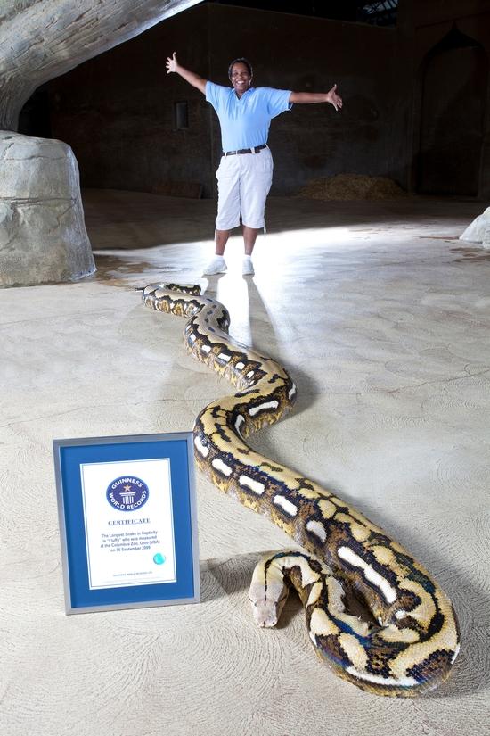 serpent le plus long