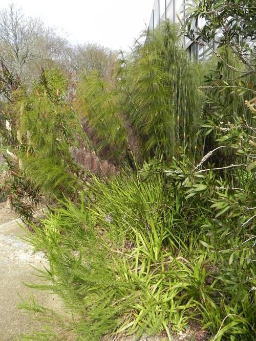 Serres Botaniques  du parc