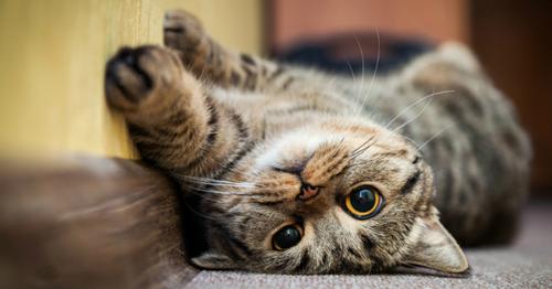 Adopter un chat quand on habite un studio ?
