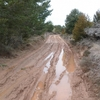 TOZAL DE GUARA 9 03 2011
