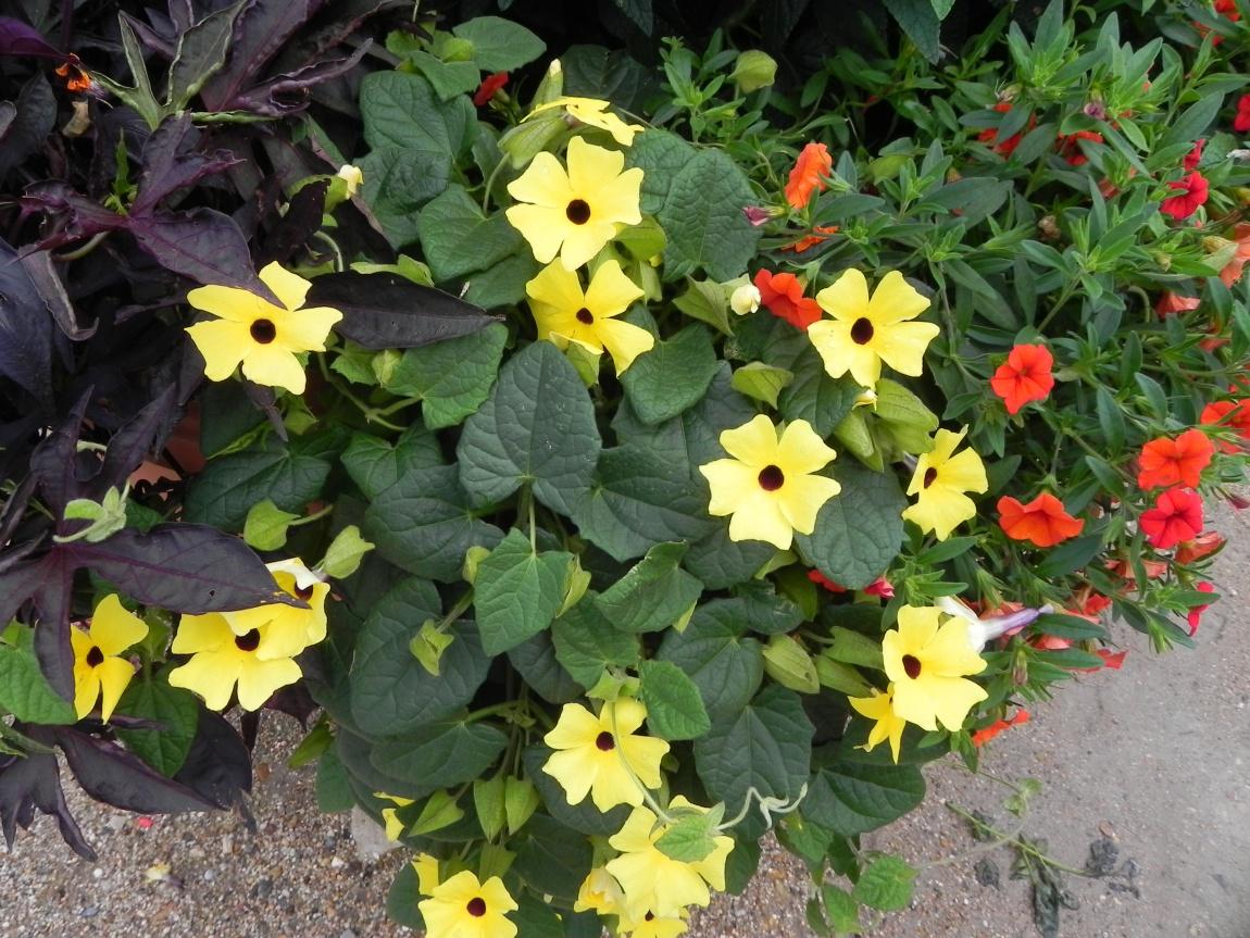 Ma fleur jaune du jour , ma couleur préférée