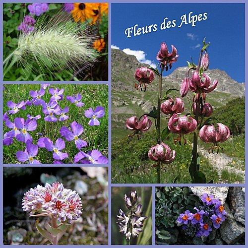 montage-fleurs-des-alpes.jpg