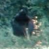 Bigfoot Kentucky