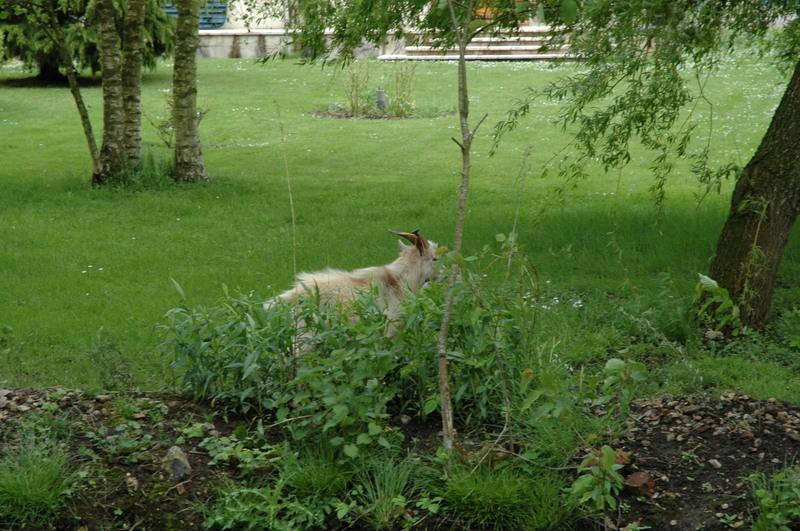 Il a franchi le jardin des voisins avec sa cop