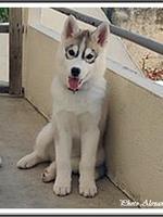 Kira (2,5 mois)
