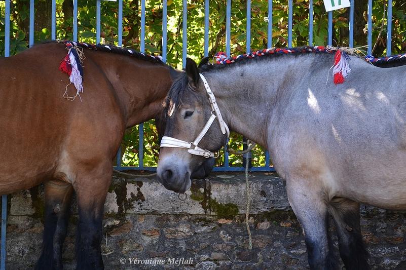 Rambouillet : Fête de la Saint Lubin : Concours de chevaux de trait