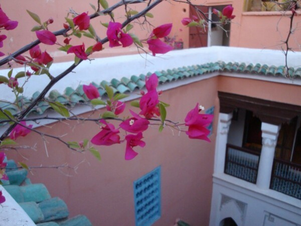 bougainvillers-a-Marrakech.jpg
