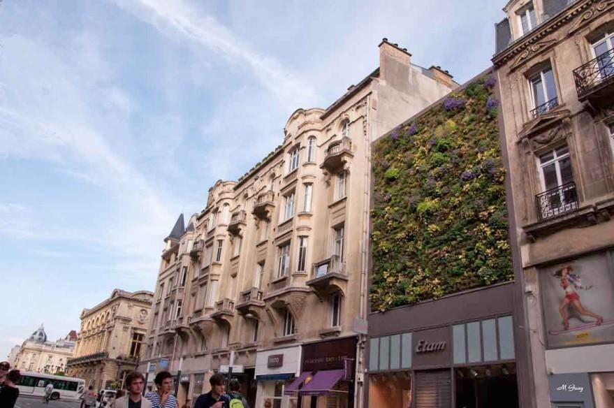 mur-vegetal-rec-5495.jpg