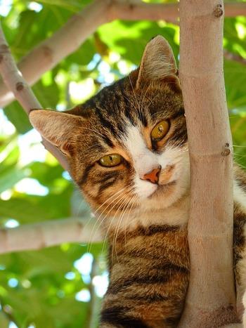 Les chats comprennent des lois physiques de base