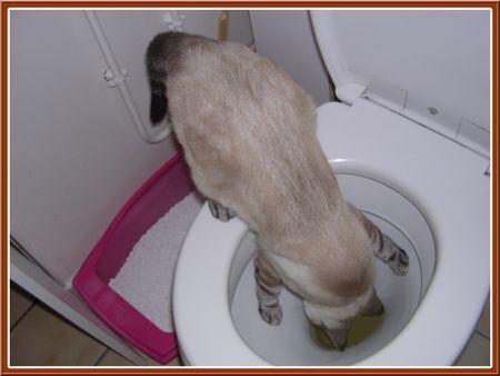 Toiletes_2