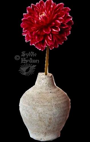Tubes fleurs création 9