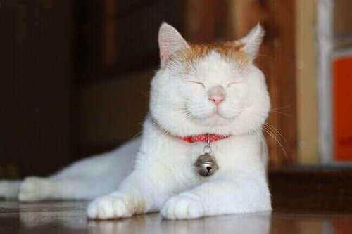 La vie secrète des chats, en citation,