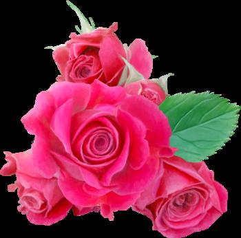 Roses (  divers ) 4