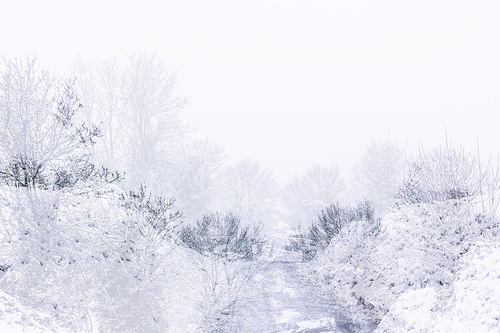 paysage, neige, hiver, hivernal