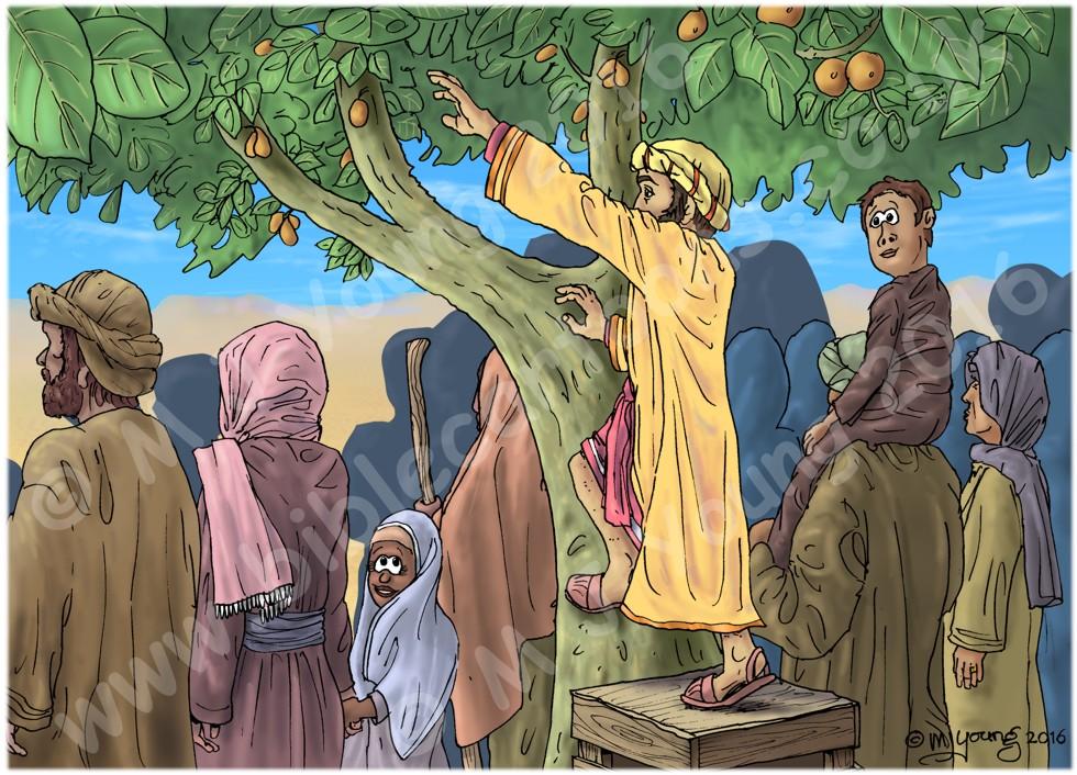 Luke 19 - Zacchaeus the tax collector - Scene 03 - Climbing tree 980x706px col