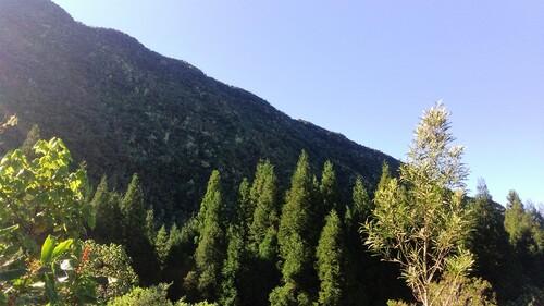 Sur la Route Forestière 58 de la Scierie et des Hauts des Makes