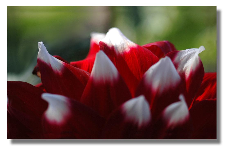 fleur..