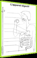 La digestion - Séquence CE1/CE2