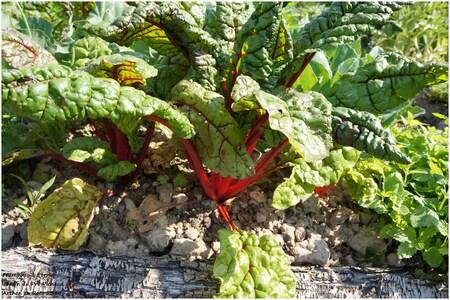 Les bons légumes du Pré Pichaud à Arthon en Retz