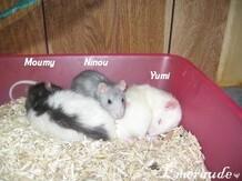Photo Rat, Moumy, Yumi et Ninou - 08.06.11