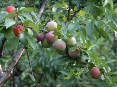 pretty-tree3