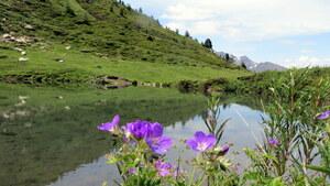 Lac de l'Arcelle