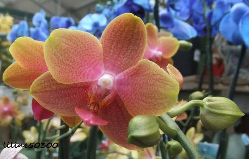 une autre de mes passions, les orchidées et la photo...