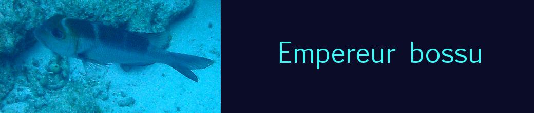 empereur bossu