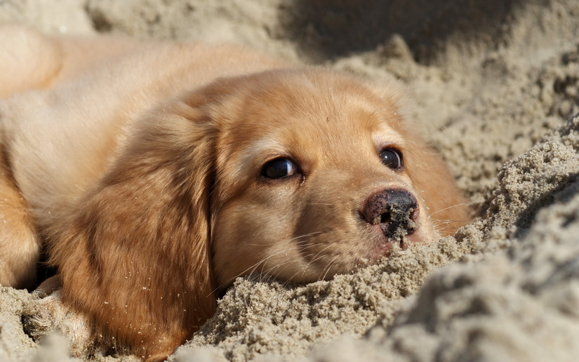 5 images de chiens