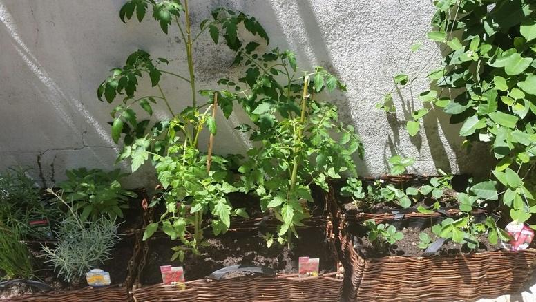 MARSEILLE - Mamiekéké , son Cricri d' amour et le jardinet .... Petites nouvelles ...