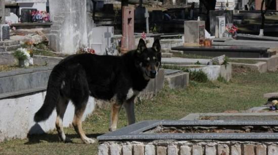 Captain chien fidèle même après la mort