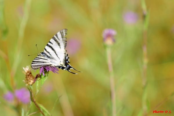 D'autres belles photos d'insectes et de fleurs réaliséées par D.S.
