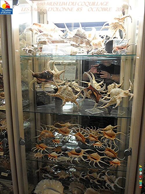 MUSEUM DU COQUILLAGE  5/16   vacances 10/ 2013 SABLES D'OLONNE    25/12/2013