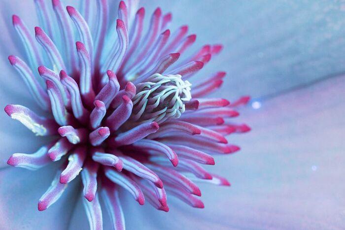 Les Fleurs pétillantes de Craig Burrows......