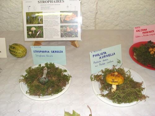 L'exposition mycologique à Châtillon sur Seine